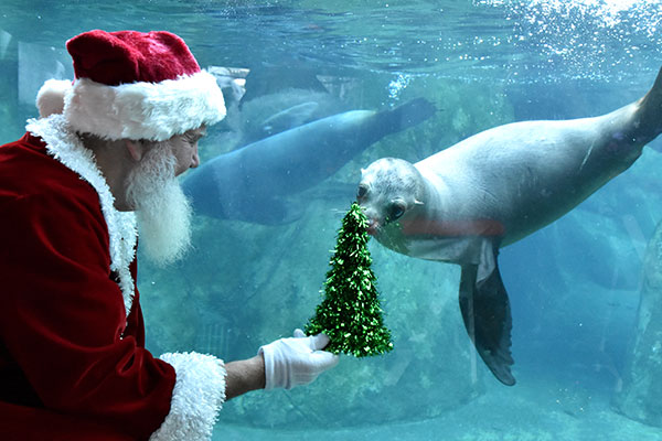 Santa with sea lion