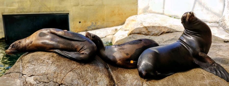 Keeper Connection: Sea Lion Stranding & Marine Mammal Care Center